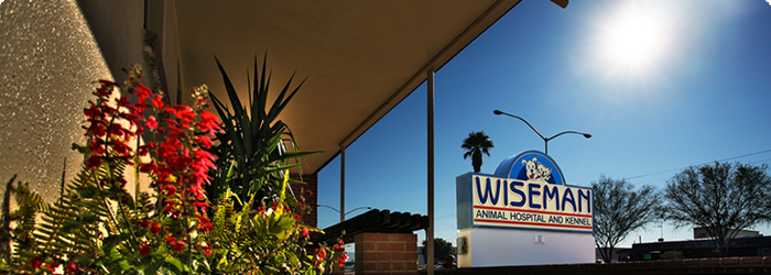 Wiseman Animal Hospital & Boarding Kennel